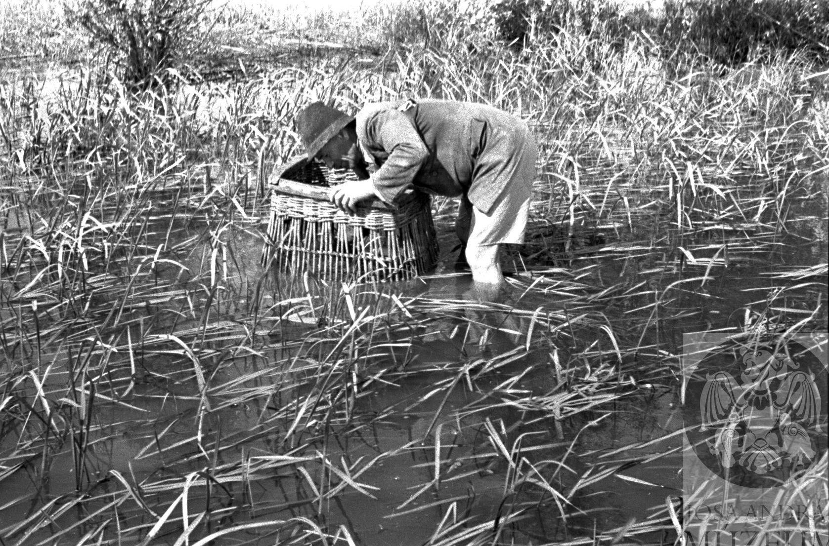 """""""A magyar halászember az igazi kemény emberek közül való; marka az evezőtől, a kötéltől cserepes, akár a vas. Rá se hederít az időre. Bőrig ázva nem is gondol a szárítgatásra, mindaddig, amíg nem végezte dolgát."""" (Herman Ottó)"""